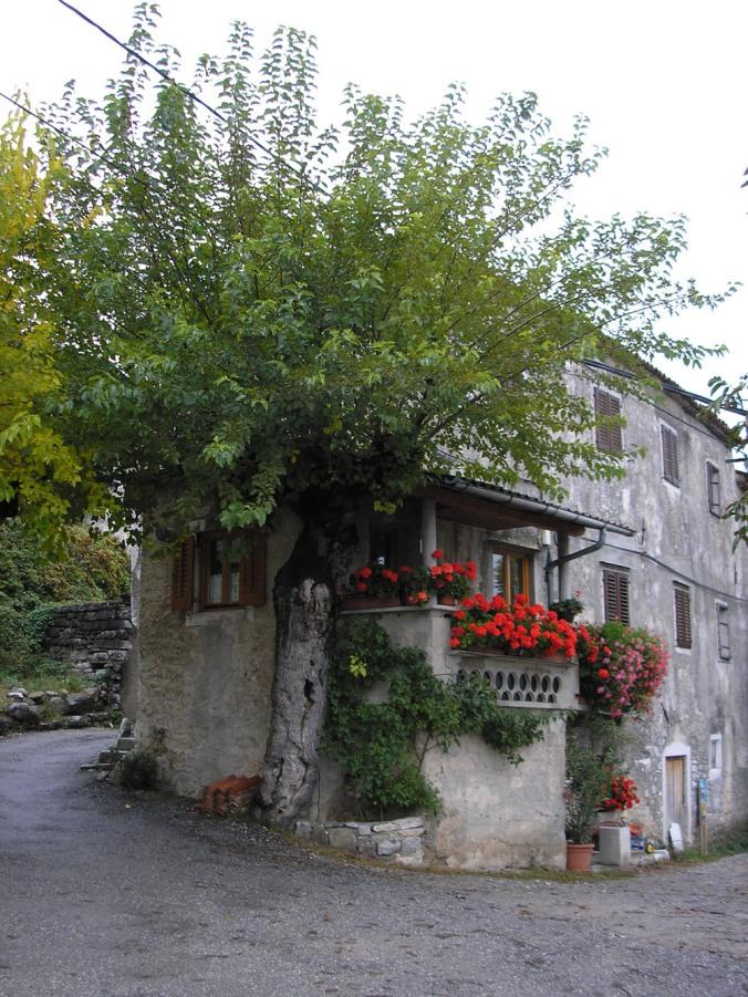 kamnita hiša, kamnita gradnja, gradnja iz kamna, naravna hiša, naravna gradnja, gradnja z naravnimi materiali, arhitekt, murva