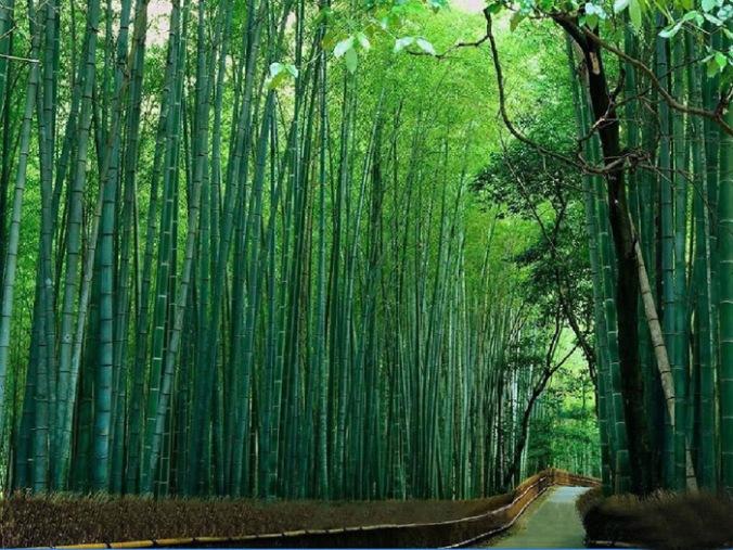 bambus, naravni materiali, naravna gradnja, gradnja z naravnimi materiali
